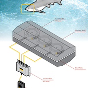 FUTEK instrumentation helps measure bite of great white shark on Discovery Channel